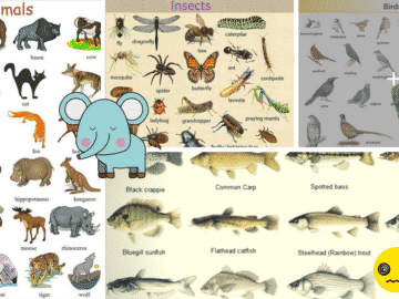 Learn English Vocabulary through Pictures: 100+ Animal Names 24