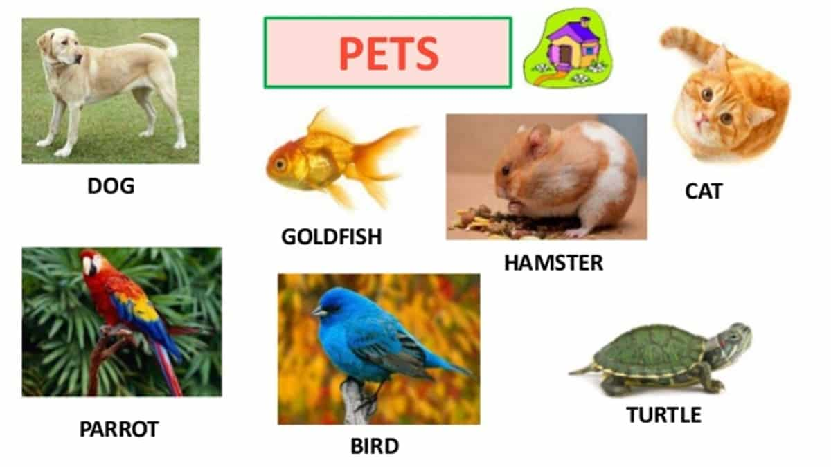 Visual Dictionary: Animals in English 5