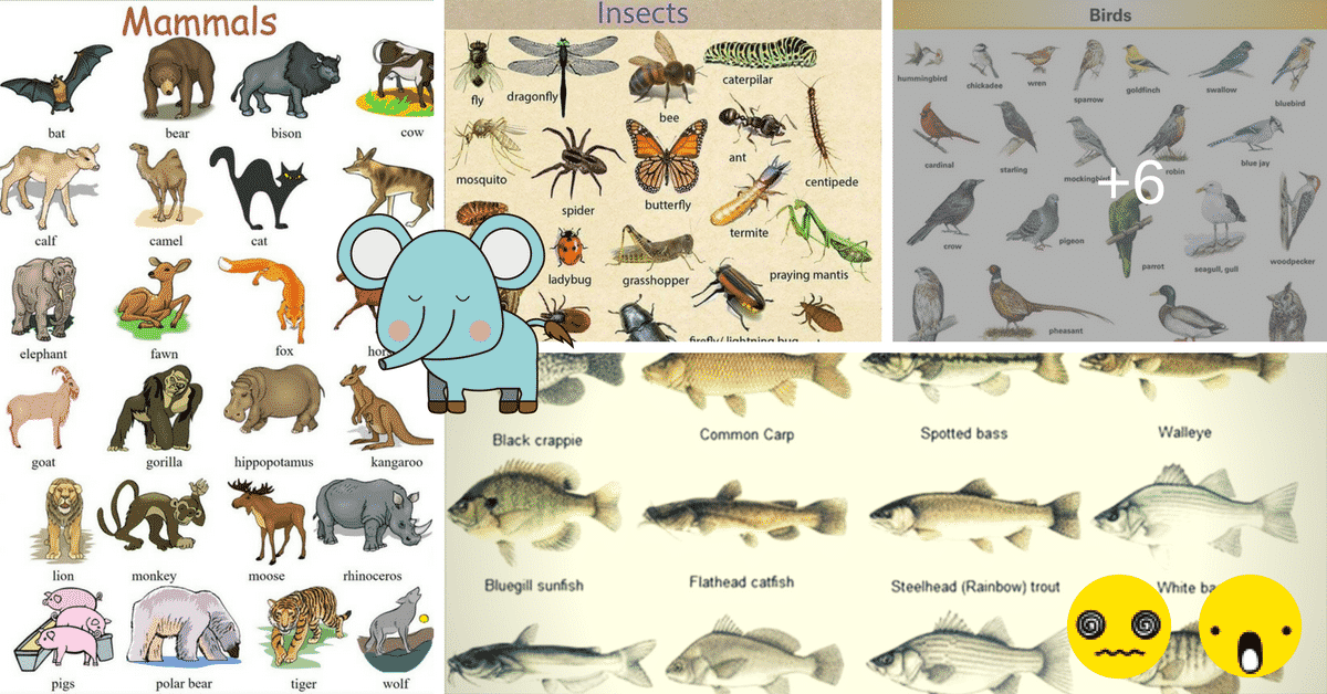 Learn English Vocabulary through Pictures: 100+ Animal Names 10
