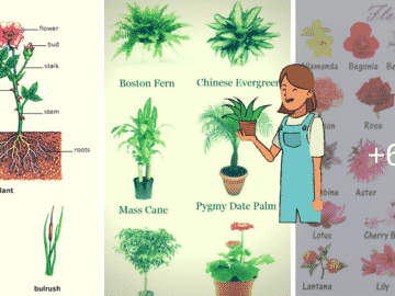 Learn English Vocabulary through Pictures: Flowers and Plants 17