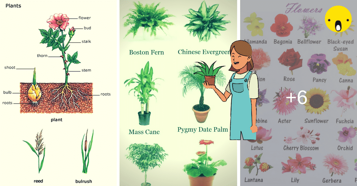 Learn English Vocabulary through Pictures: Flowers and Plants 10