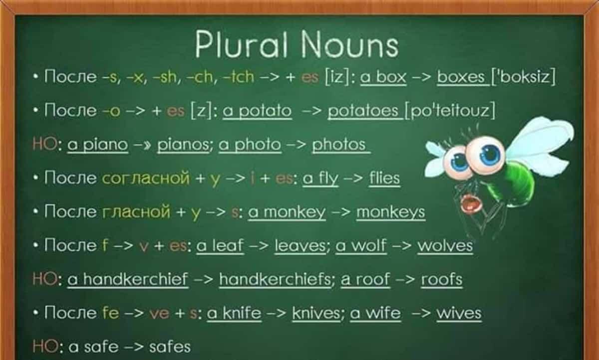 Plural Nouns in English