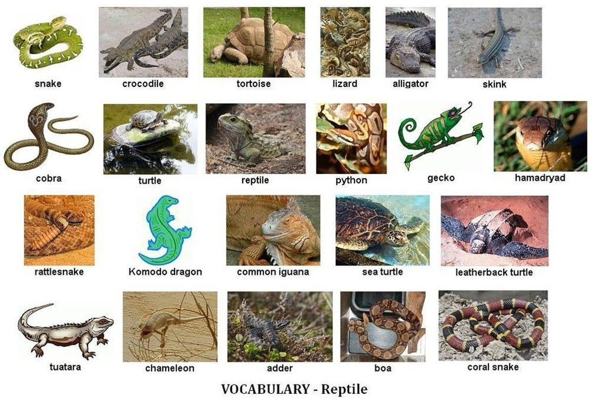 Learn English Vocabulary through Pictures: 100+ Animal Names 9