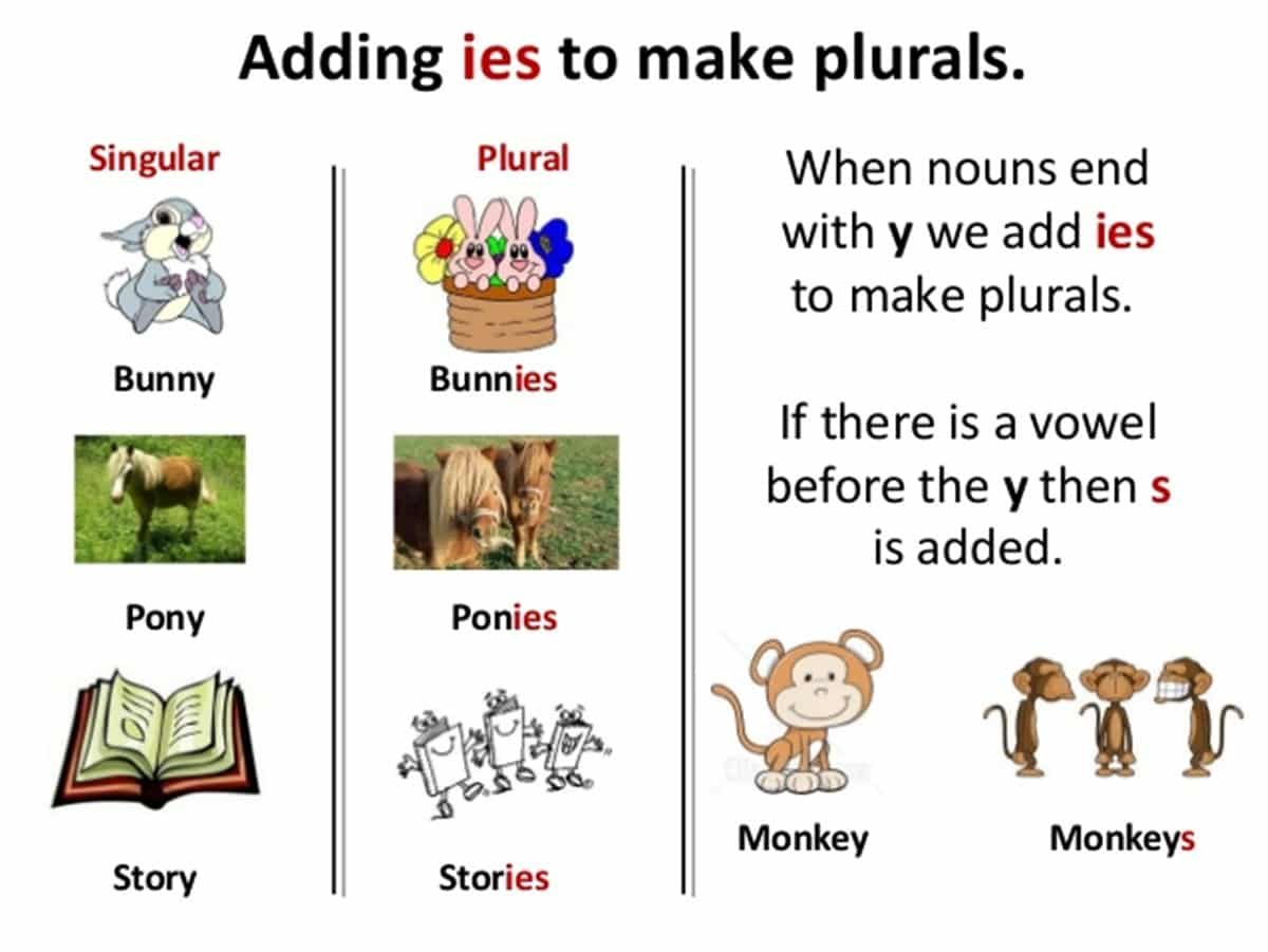 Singular and Plural Nouns in English