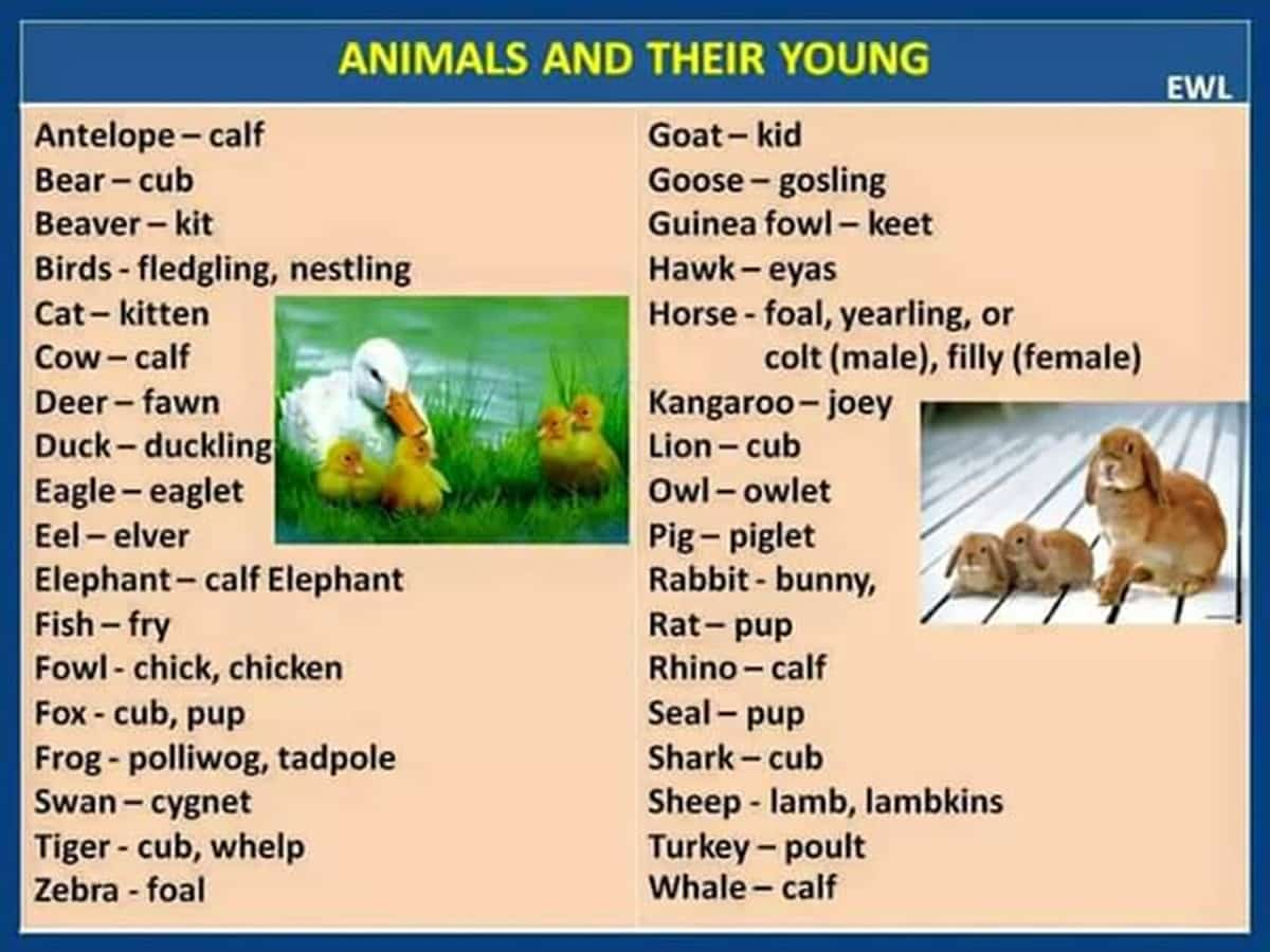 Male - Female - Young Animals in English 3