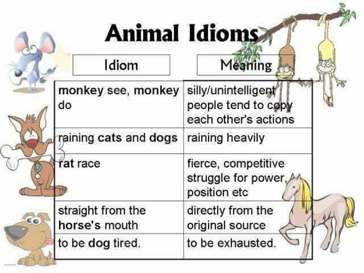 30+ Amazing Animal Idioms in English 16