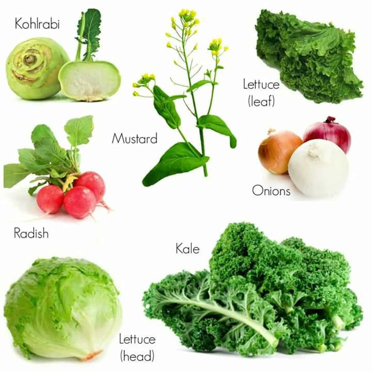Vegetables Vocabulary in English 2