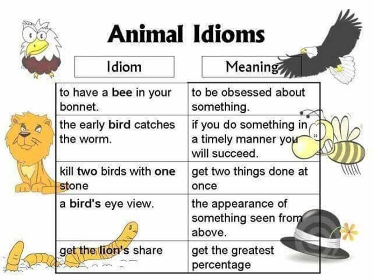 30+ Amazing Animal Idioms in English 18