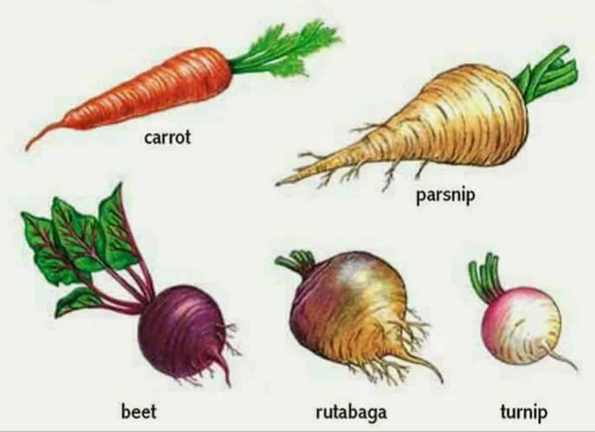 Fruits and Vegetables Vocabulary in English 4
