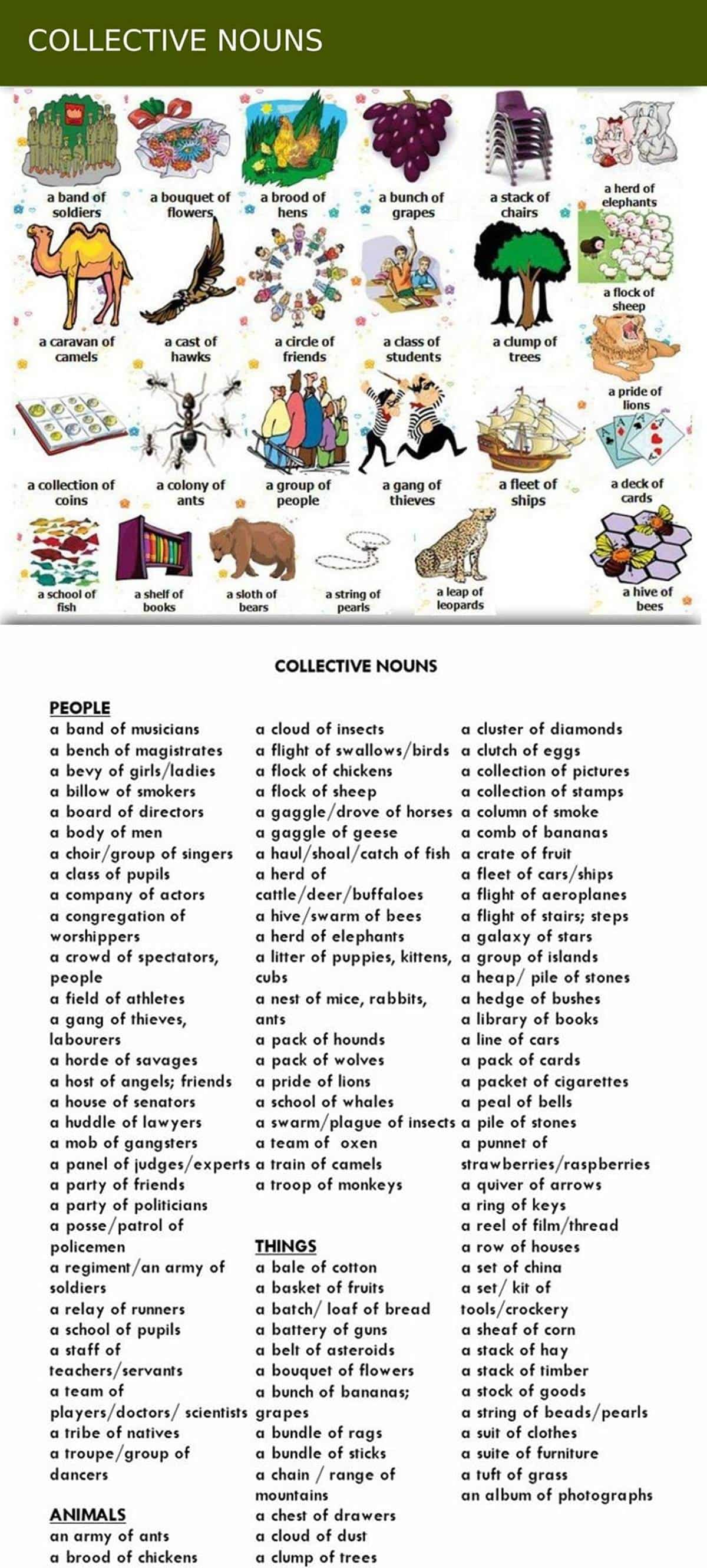 Group Words for People, Animals and Things