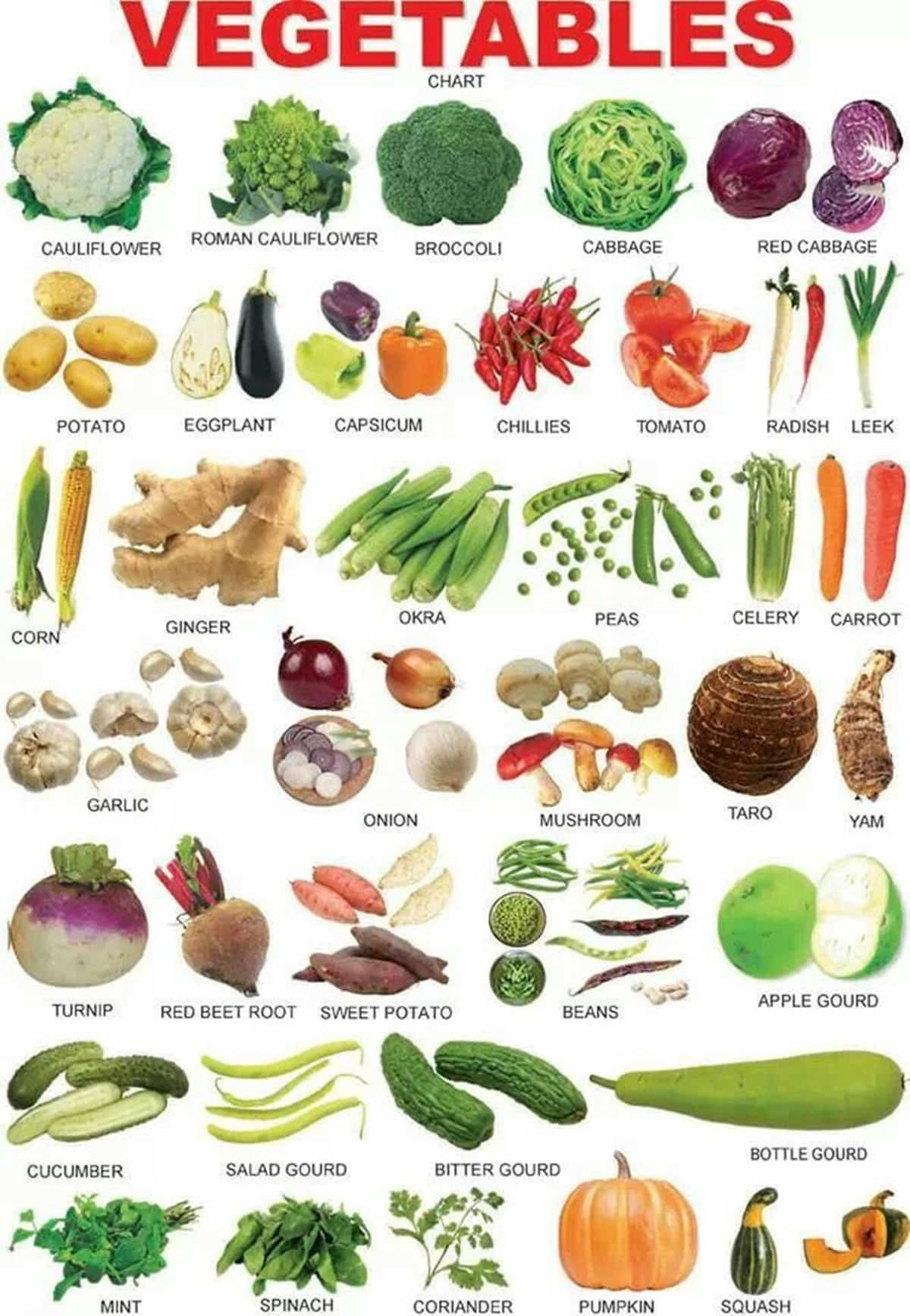 Vegetables Vocabulary in English 14