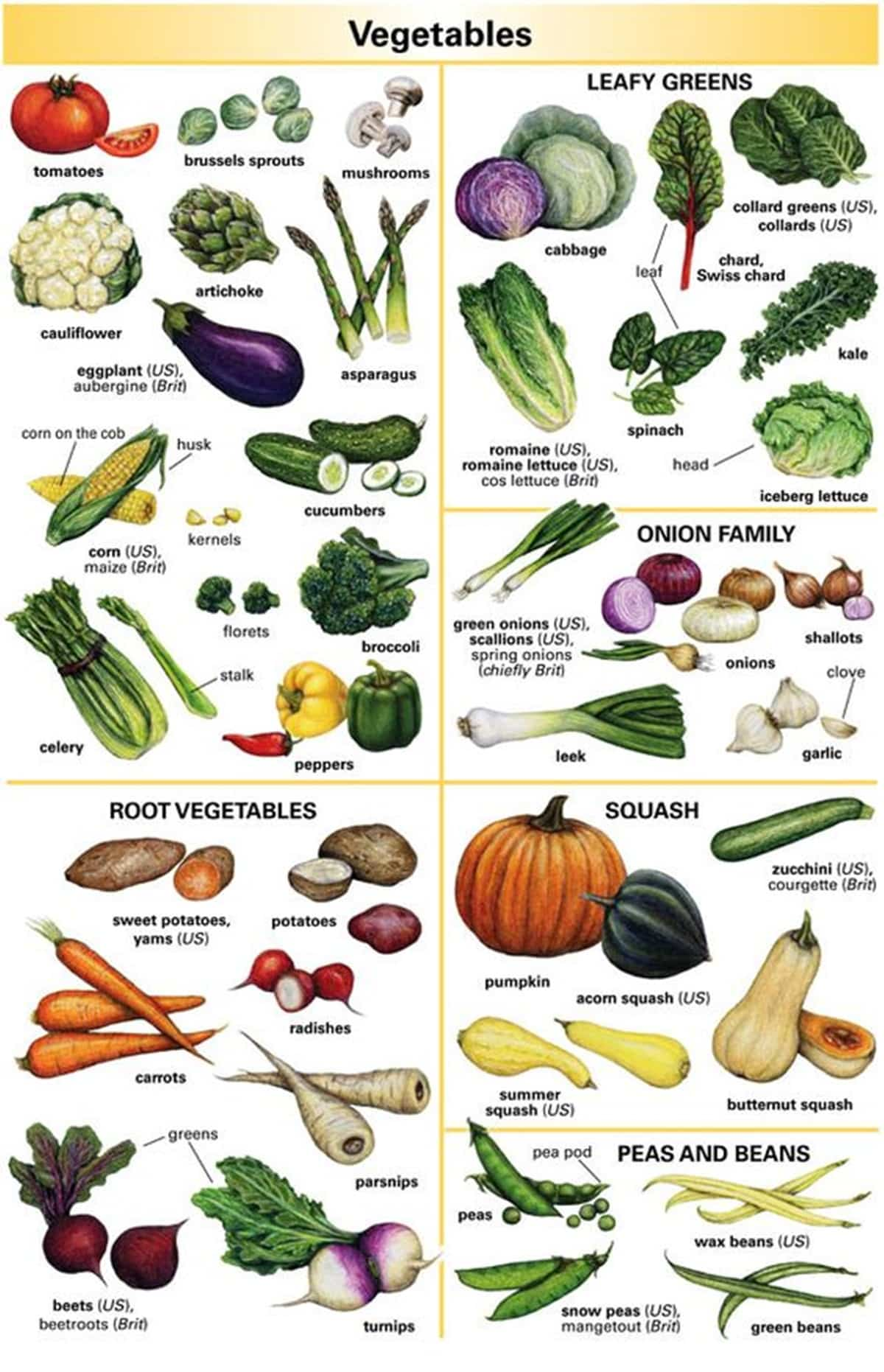 Vegetables Vocabulary in English 3