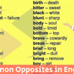 English Vocabulary: Internal Organs of the Human Body 2