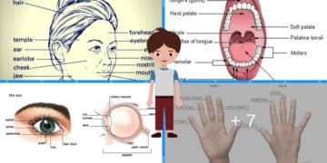 English Vocabulary:  Parts of Your Body 3