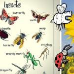 Farm/ Domestic Animals Vocabulary in English 2