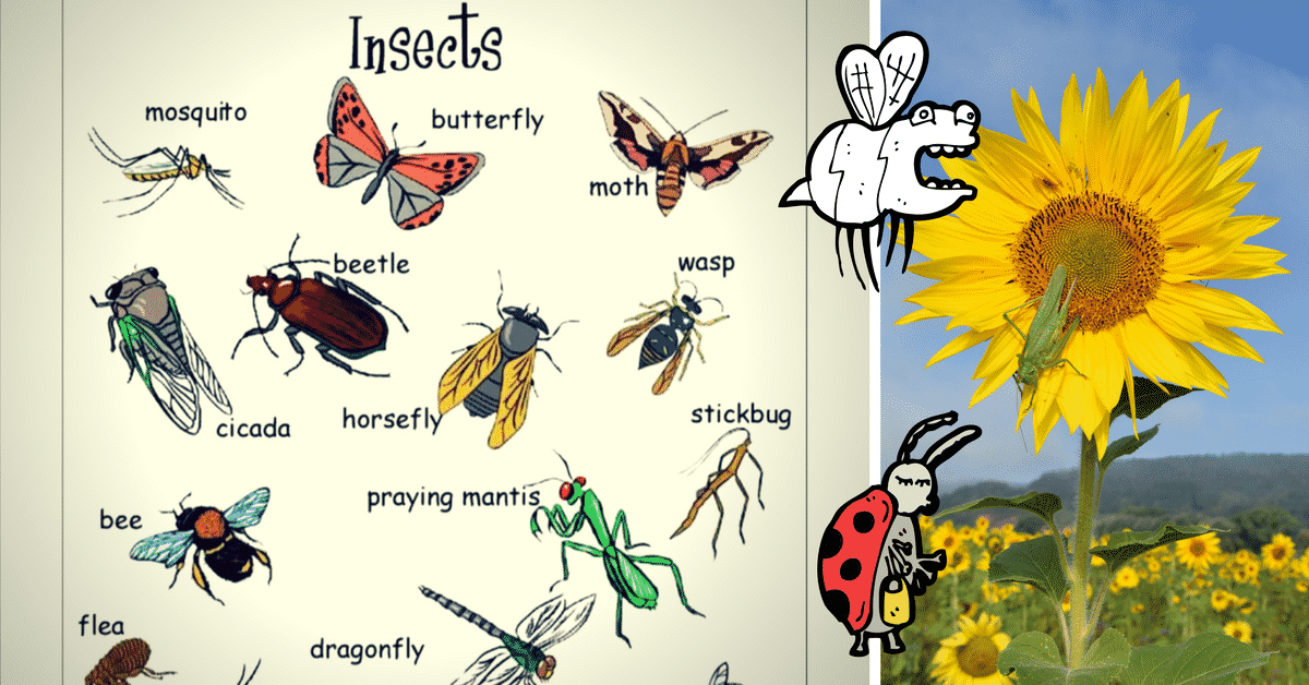 Insects Vocabulary in English 1