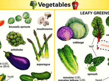 Vegetables Vocabulary in English 30