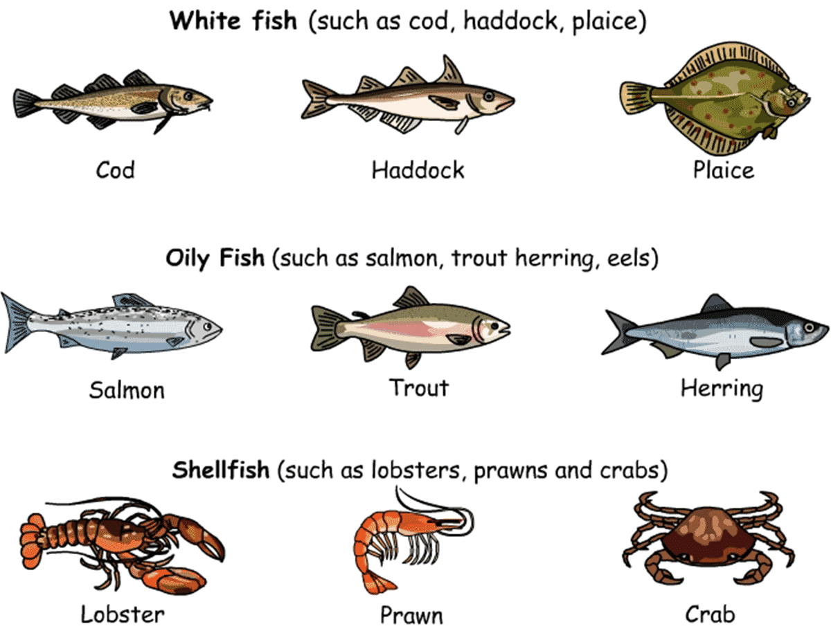 Meat, Poultry and Seafood Vocabulary 4