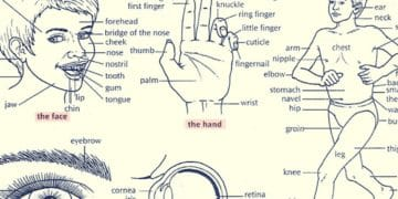 English Vocabulary: Parts of the Human Body 2