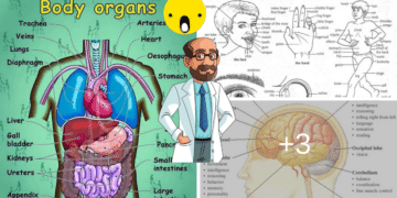 The Human Body Vocabulary: Let's Explore the Human Body! 6
