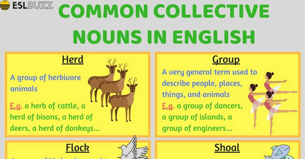 Common Collective Nouns in English 6