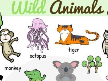 Wild Animal Vocabulary in English 21