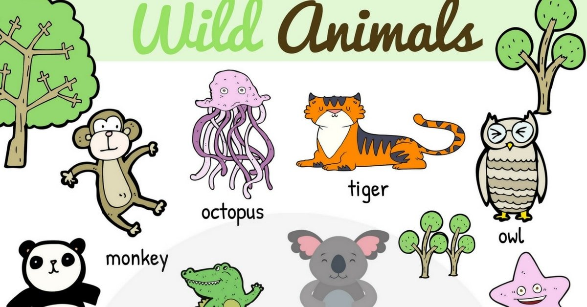 Wild Animal Vocabulary in English 4