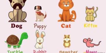 [Video] Pets Vocabulary in English 8