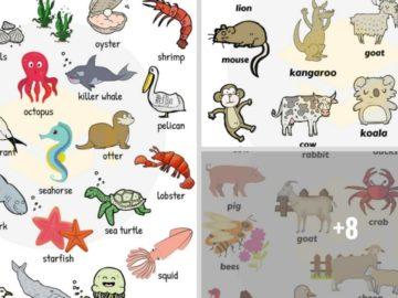 Learn Animal Names in English 16