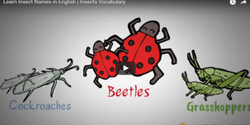[Video] Insects Vocabulary in English 13