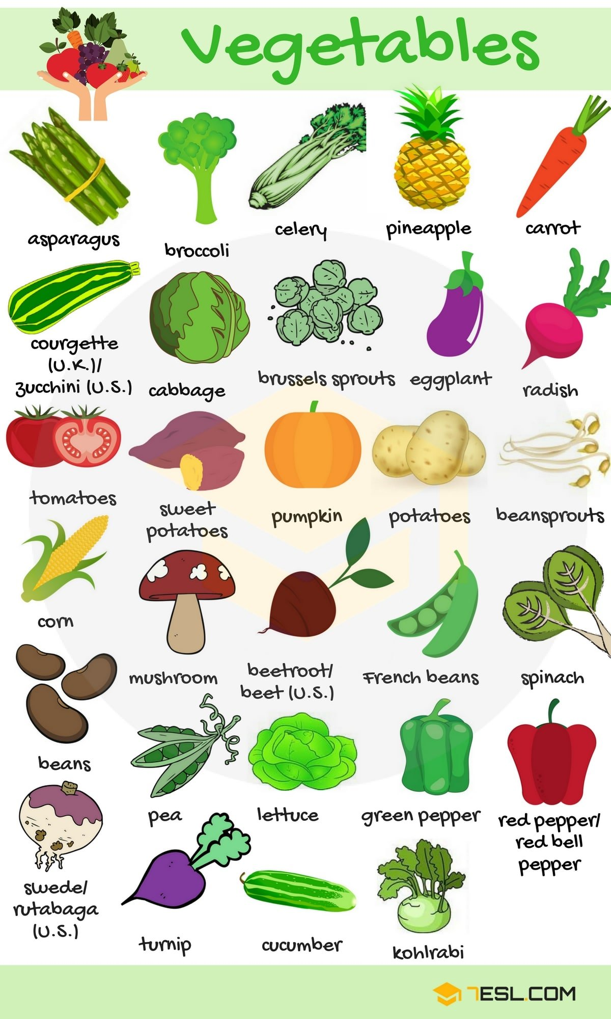 Vegetables Vocabulary in English 1