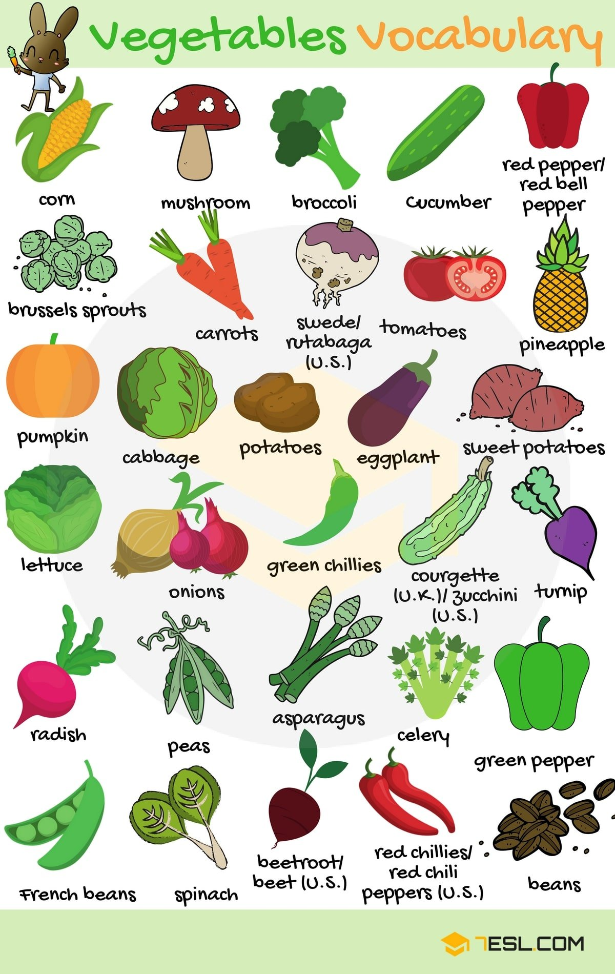 Vegetables Vocabulary in English