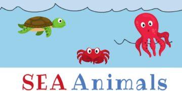 [Video] Sea Animals Vocabulary in English 3