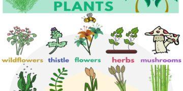 English Vocabulary for Plants 7