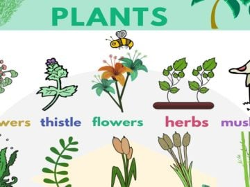 English Vocabulary for Plants 16
