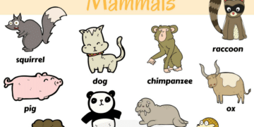 Learn Mammals Vocabulary in English through Pictures 10