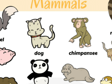 Learn Mammals Vocabulary in English through Pictures 14