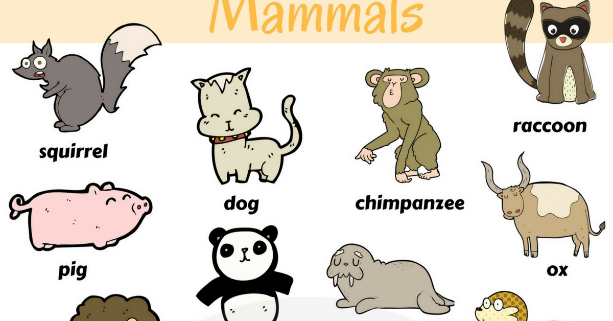 Learn Mammals Vocabulary in English through Pictures 5