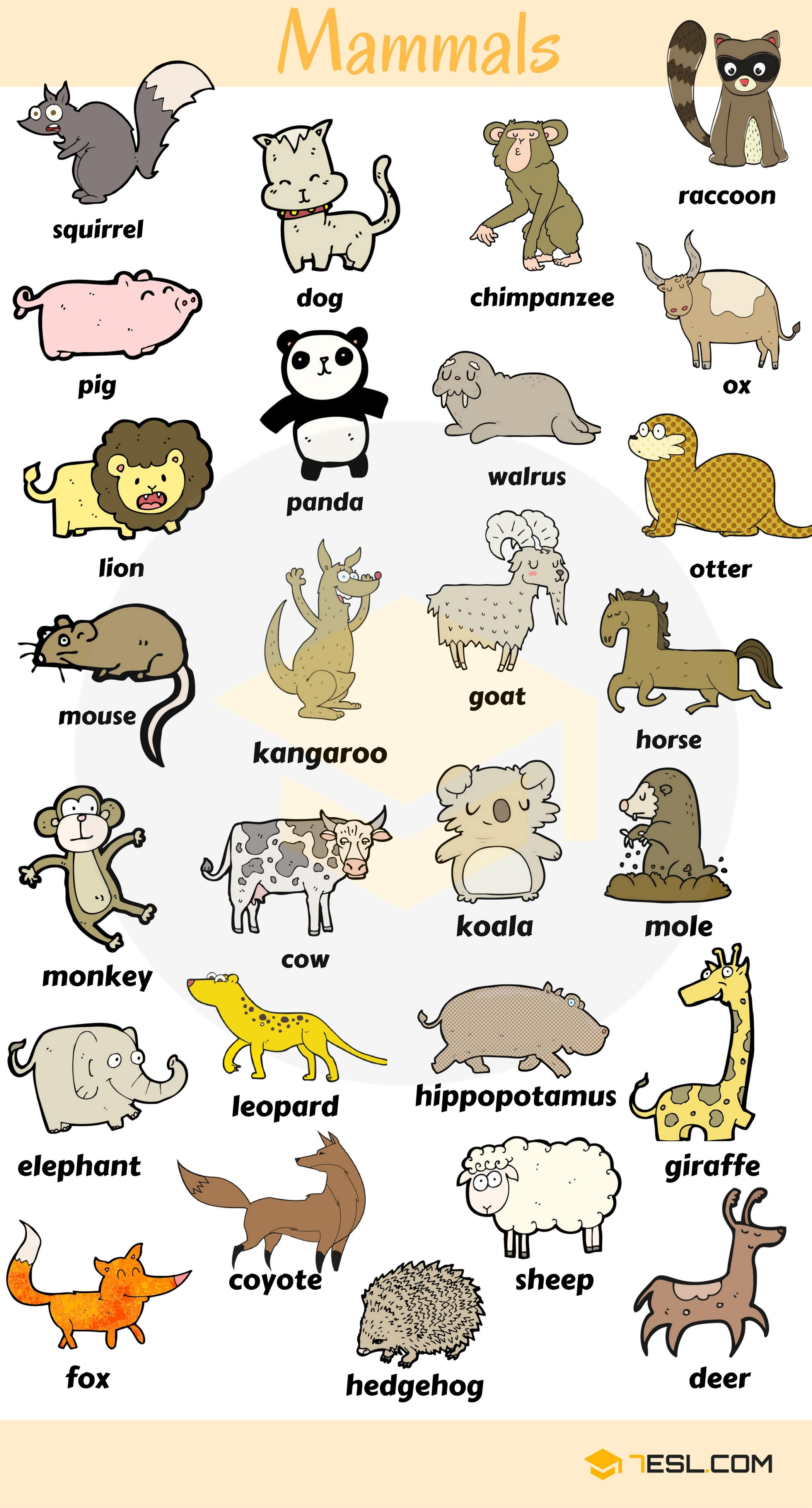 Learn English Vocabulary through Pictures: Mammals