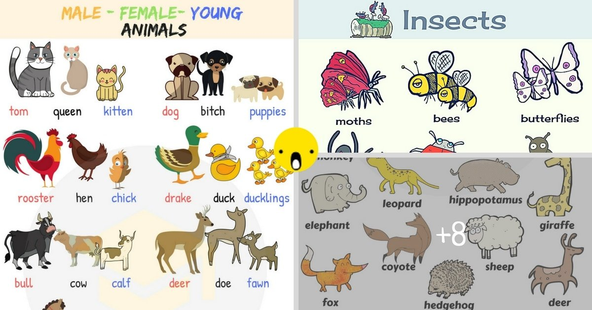 Learn Animals Vocabulary in English 6