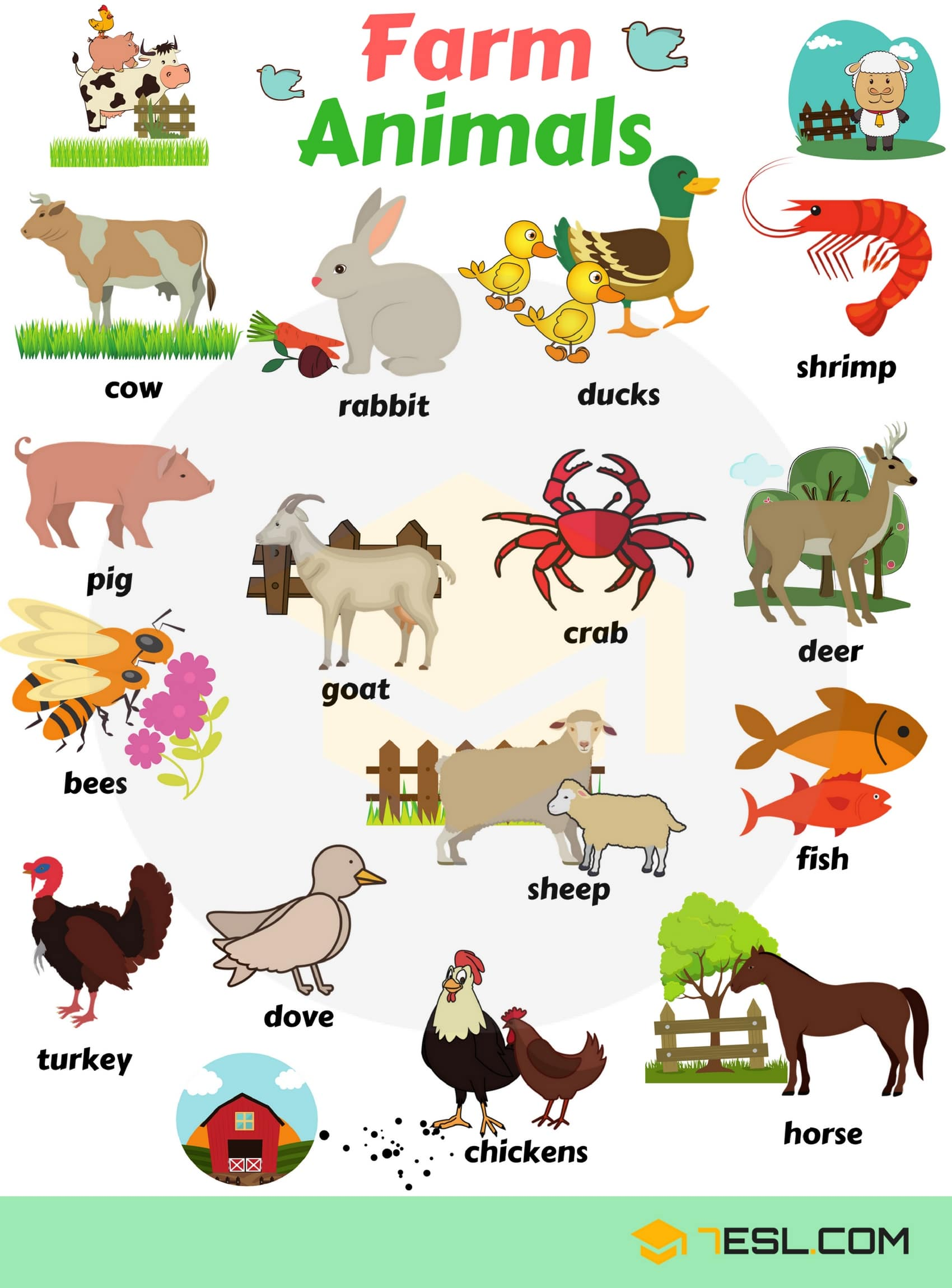 Learn Animals Vocabulary in English 21