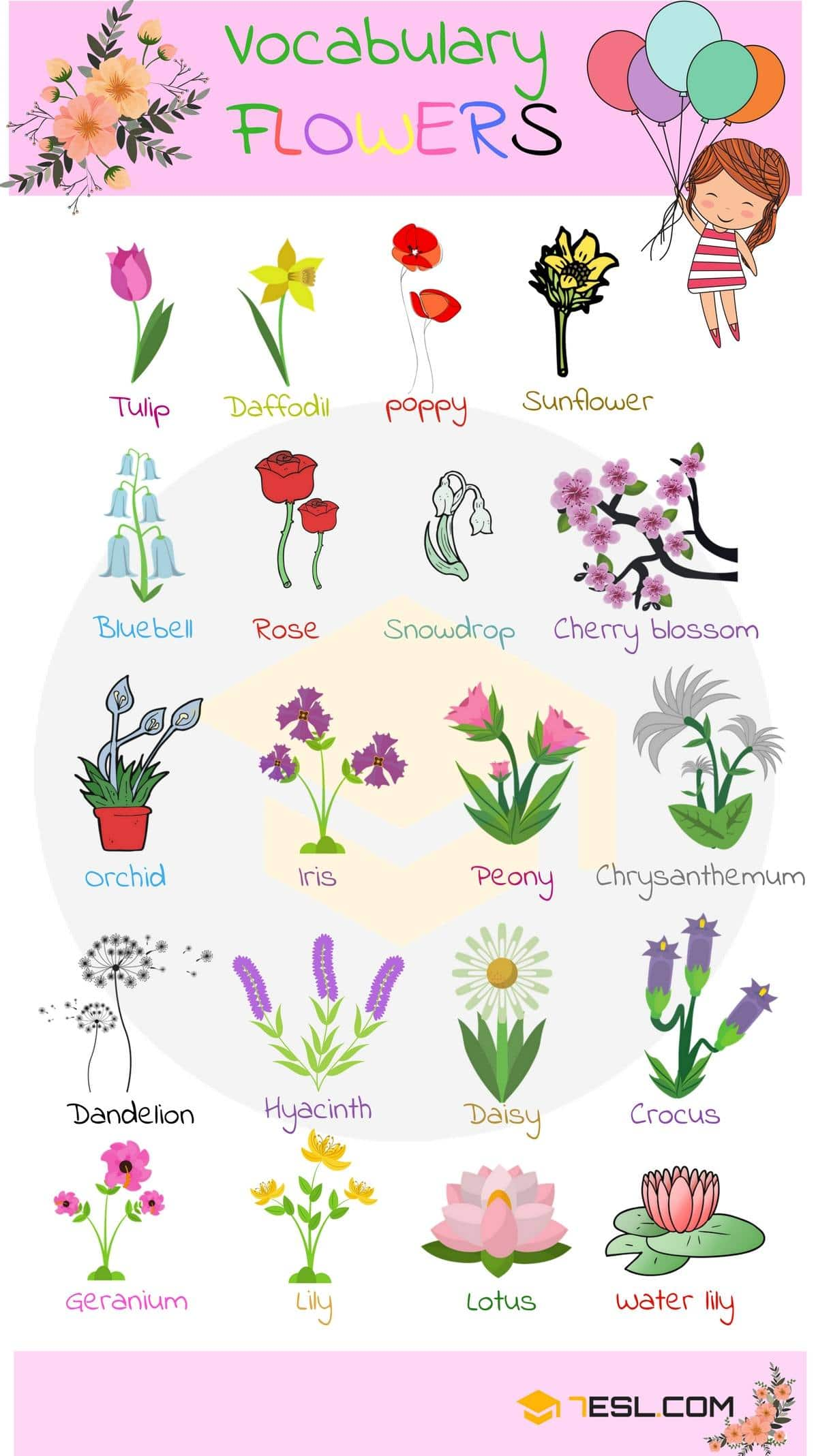 Plant and Flower Vocabulary in English 2