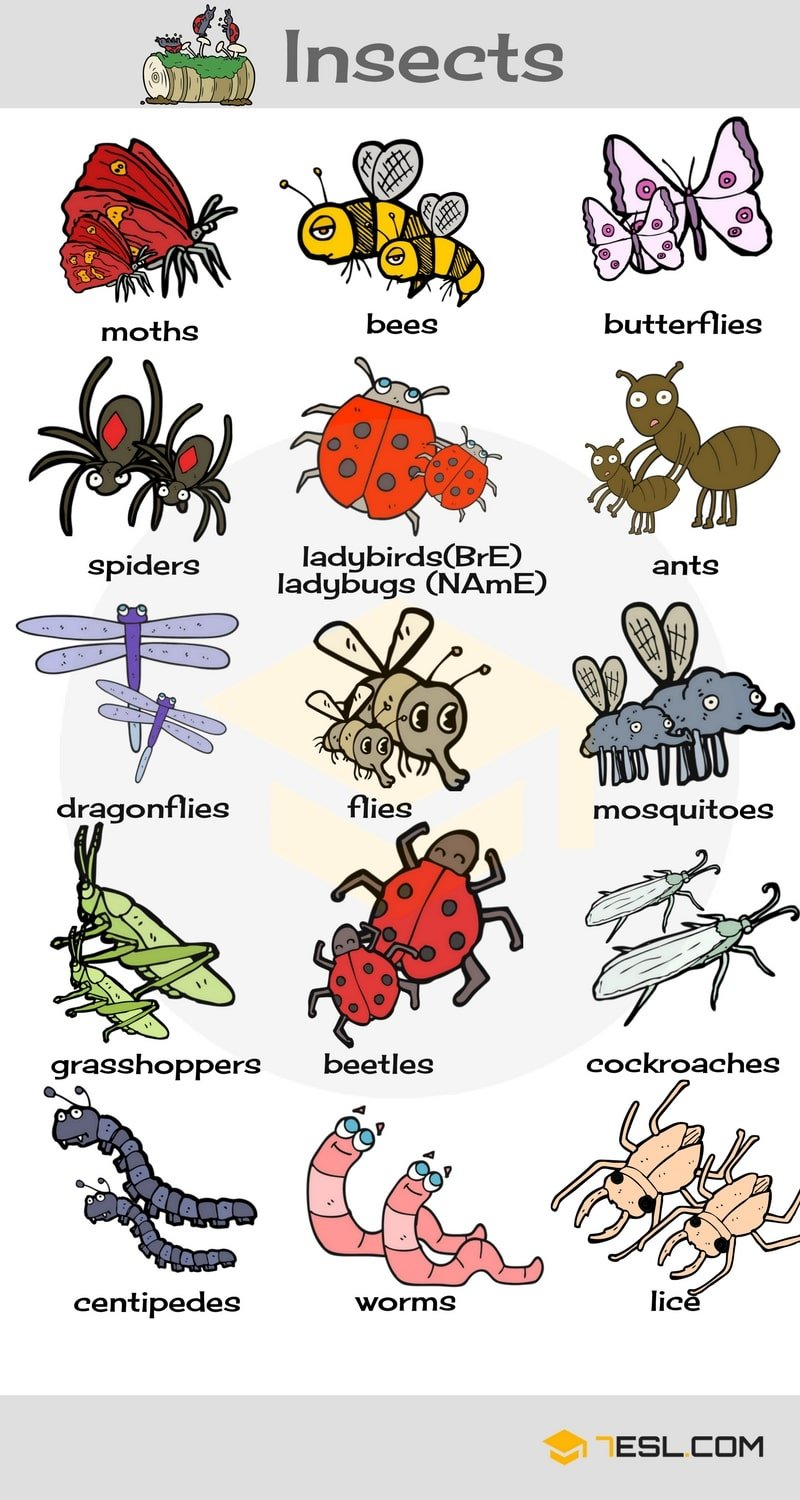 Learn Animals Vocabulary in English 16