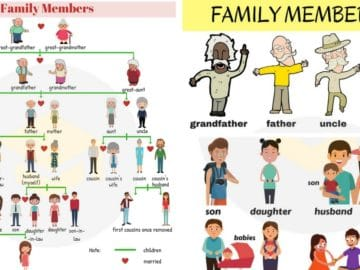 Members of the Family Vocabulary in English 18