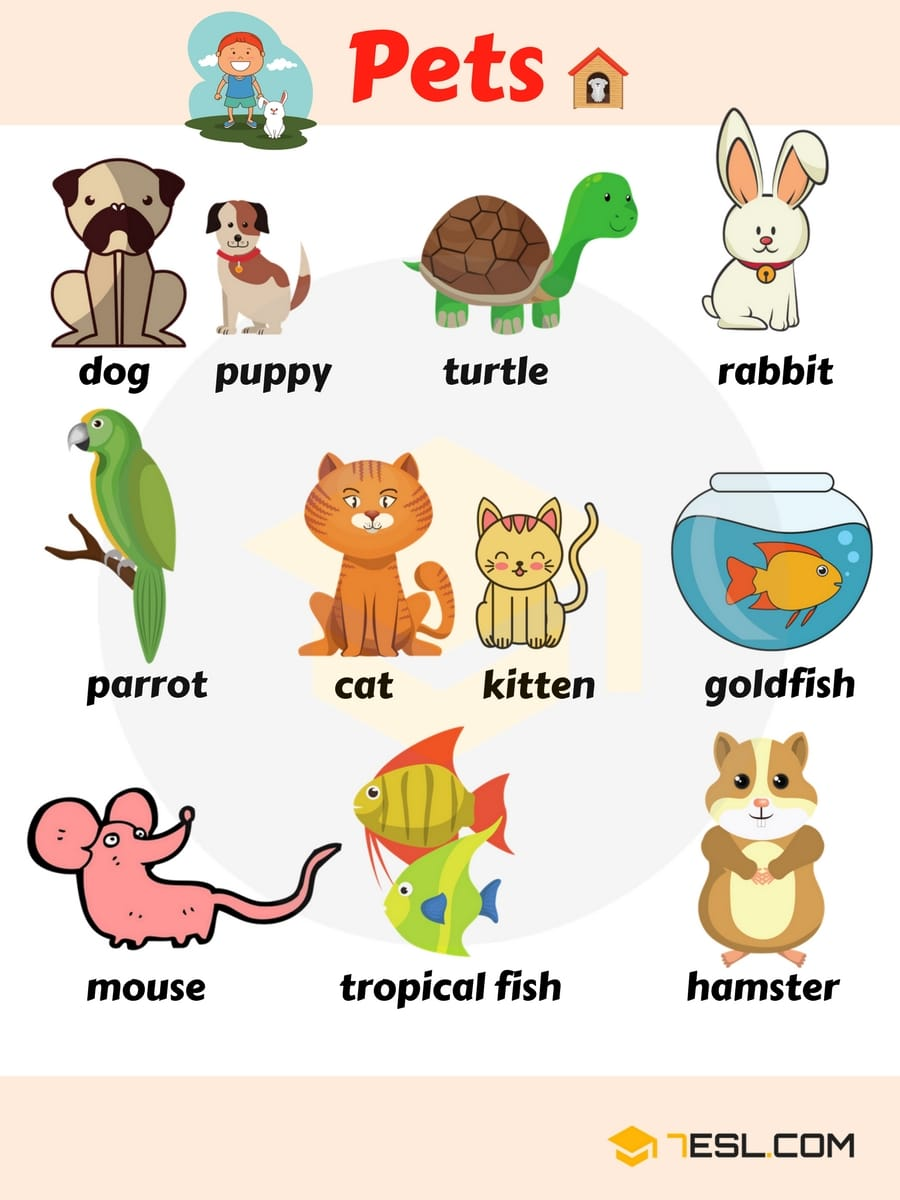 Learn Animals Vocabulary in English 9