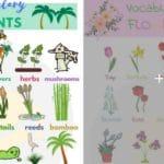Learn Animals Vocabulary in English 3