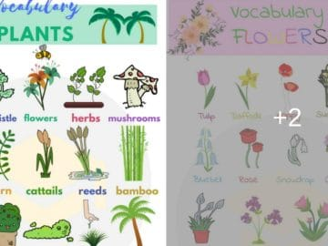 Plant and Flower Vocabulary in English 18