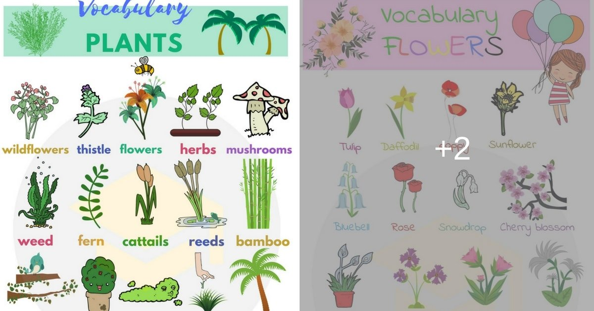 Plant and Flower Vocabulary in English 1