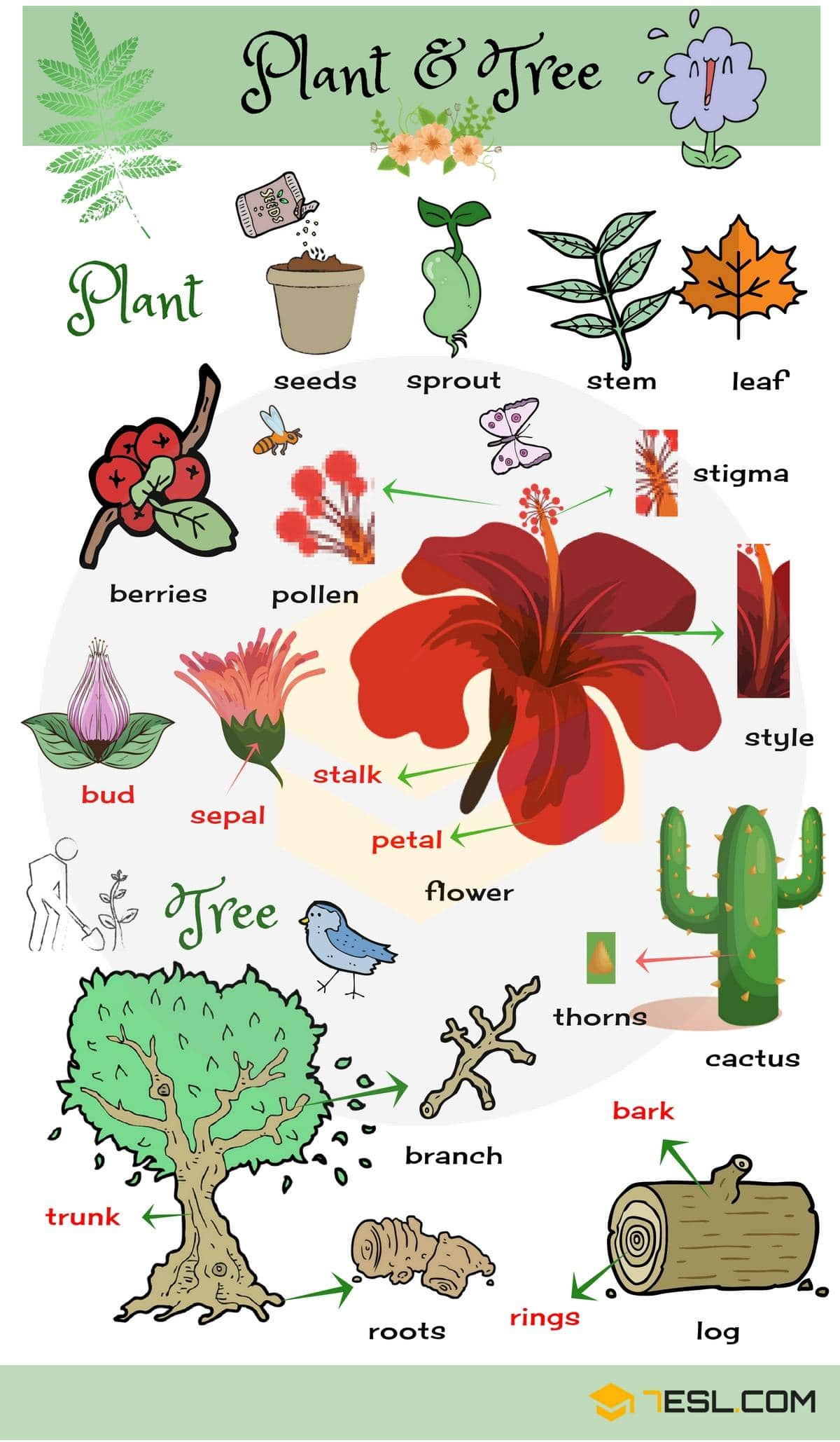 Plant and Flower Vocabulary in English 3