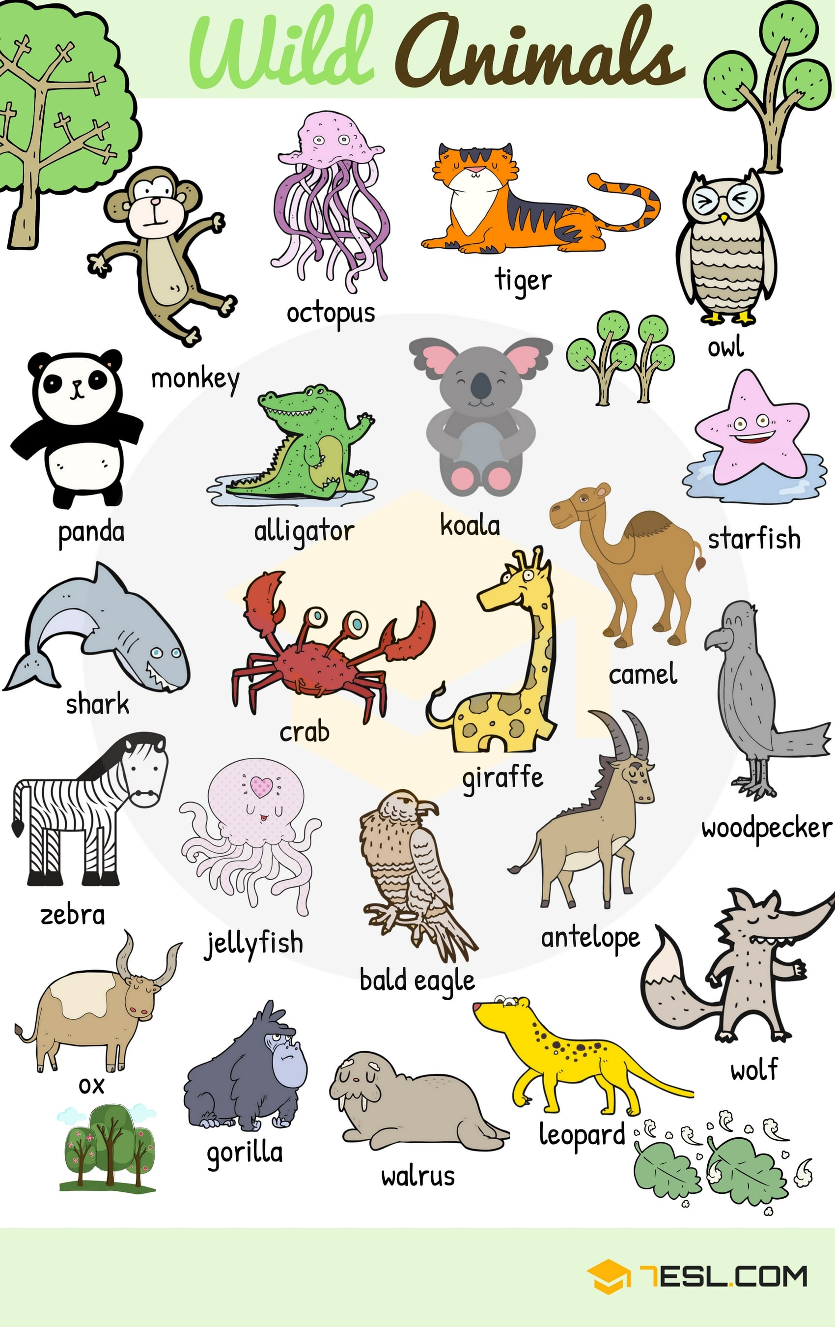 Learn Animals Vocabulary in English 5
